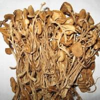 茶树菇 茶树菇价格 修水特产茶树菇