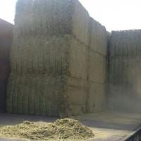 西班牙苜蓿草