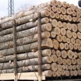 越南黄花梨进口流程|青岛木材进口报关