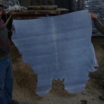 蓝湿牛皮进口报关|蓝湿牛皮进口代理|蓝湿牛皮进口清关流程图片