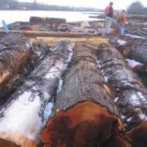 软槭木进口报关清关代理流程图片