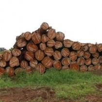 非洲阔叶黄檀如何进口报关印尼阔叶黄檀原木进口报关代理