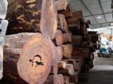 上海市北美原木板材进口报关/清关/木方进口代理