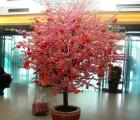 北京仿真桃花树定做 批发樱花树 桃花树厂许愿树 榕树批发