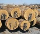 泰国橡胶木进口报关代理东南亚橡胶木进口到广东 报关代理