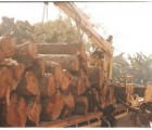 缅甸大红酸枝进口到广东报关代理老挝红酸枝如何进口报关代理