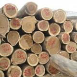 印尼柚木进口深圳大铲湾报关代理服务|洽源木材集装箱进口清关公