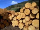 东莞阔叶黄檀|巴西黄檀|非洲崖豆木进口清关广东木材进口报关公司