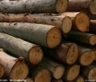 上海洋山港代理木材报关,缅甸木材进口报关公司