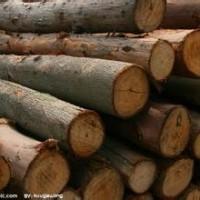 上海木材一般贸易清关