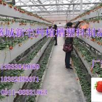 石家庄藁城市立体种植槽厂 草莓滴灌种植槽 气雾栽培种植槽