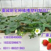 石家庄草莓槽育苗槽厂气雾栽培种植槽