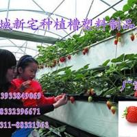 草莓种植槽PVC塑料厂制造 草莓立体种植槽