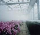 金诚花卉种植微喷加湿设备