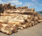 青岛东南亚非洲南美洲进口木材报关代理
