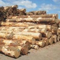 东南亚青岛进口原木木方