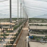 河北藁城管式和三维立体式草莓槽育苗槽