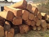 宁波进口非洲原木国际运输代理