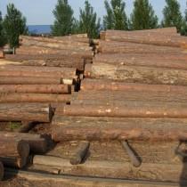 非洲桃花心木进口海关估价