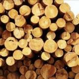 橡胶木进口报关代理丨税率费用丨申报要素