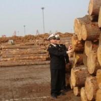 木材进口代理报关