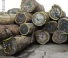 广州机场木材进口商检
