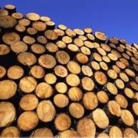 木材进口清关公司木材进口清关费用木材进口清关流程