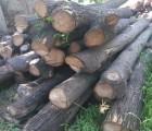 长期供应杏木槐木榆木苦楝木原木