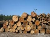 代理木材进口通关青岛口碑好的报关公司