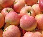 山东新一季苹果大量上市了