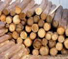 东莞木材进口清关熏蒸费用是多少 东莞木材进口报关公司