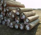 马来西亚印茄木深圳进口代理清关公司