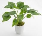 武汉办公室内植物盆栽租摆送货上门,武汉花卉租摆包维护和定期更