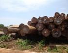 青岛木材进口报关代理公司