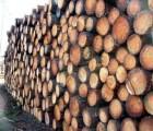 广州黄埔港椰壳丝进口清关仓储运输|棕榈丝|棕榈壳进口报关公司