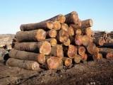 深圳东南亚原木进口报关|泰国橡胶木板材进口