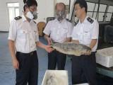 上海市上海食品进口代理公司