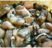 湛江生蚝多少钱一斤_湛江生蚝一斤要多少钱