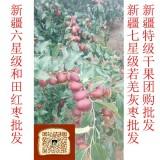广州市新疆红枣品牌供应商 高品质红枣 普通干果价格