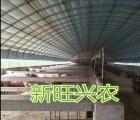 新旺兴农种植大棚建设71012大棚配件生产