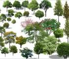 黑龙江哈尔滨江北山地阔叶乔木树种蒙古栎