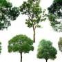 黑龙江哈尔滨江北针叶树种红松、赤松