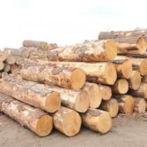 非洲原木进口报关代理公司/南美板材进口报关代理公司