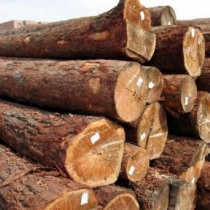 欧洲云杉木材进口报关流程/非洲木材进口清关费用