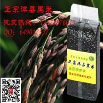 正宗洋县黑米批发 500g减肥功效膳食黑米 产地直供图片