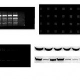 培清 Mini化学发光凝胶成像分析系统