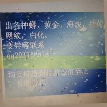 北京哪里有缅甸蟒卖