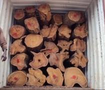 东莞国外红木|原木进口代理公司