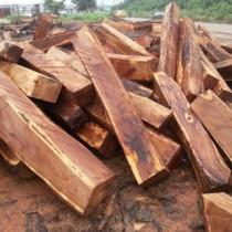 东莞国外红木|原木国际货运代理公司