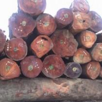 东莞国外红木|原木国际物流公司